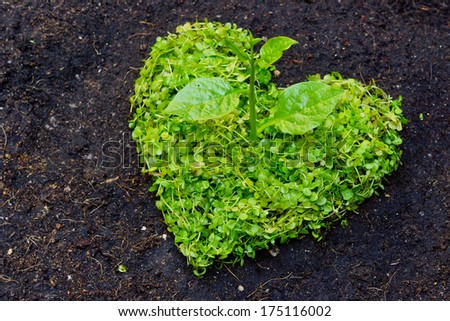 a tree arranged as a heart shape on cracked earth / growing tree / love nature / save the world / csr - stock photo