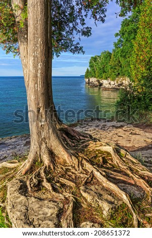 A tree clings to the rocky cliff overlooking Lake Michigan at Cave Point on Wisconsin's Door County Peninsula near Jacksonport. - stock photo