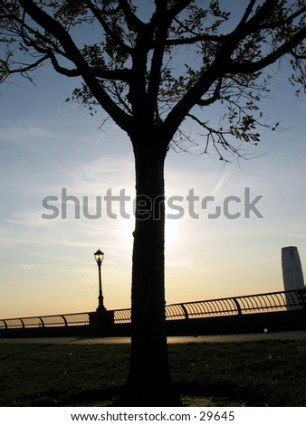 a tree during sunset in Battery Park, NYC - stock photo