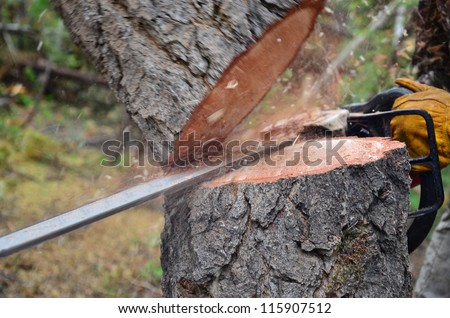 A tree falling in the forest while being cut with a chainsaw - stock photo