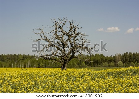 A tree in a rapeseed flower meadow - stock photo