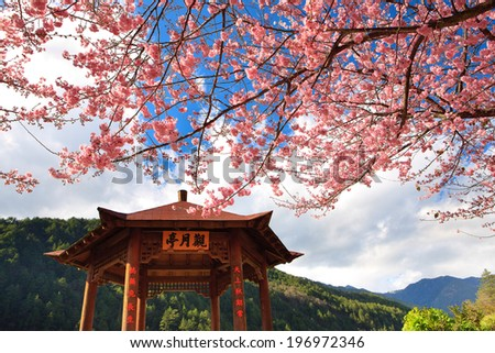 A tree in bloom near a gazebo and mountains. - stock photo
