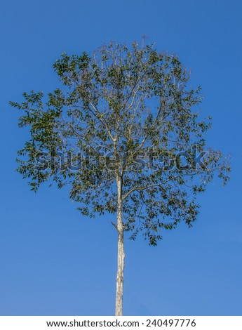 A tree in cleared sky background