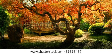 A tree in Fall colors gracing the garden area of a Japanese tea house. - stock photo