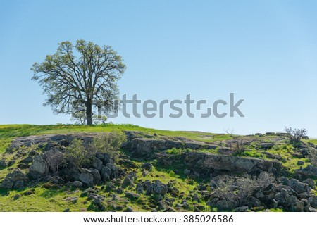 A Tree on rocks and green landscape with blue sky.