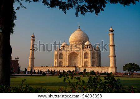 A tree provides a frame around the Taj Mahal at sunset. - stock photo