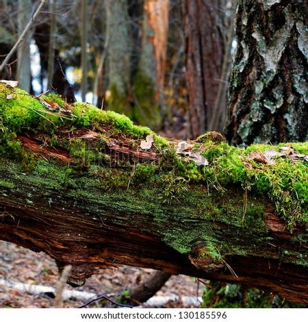 a tree stump in the forest - stock photo