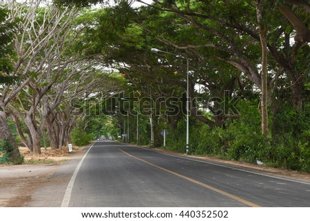 A Tree tunnel and road