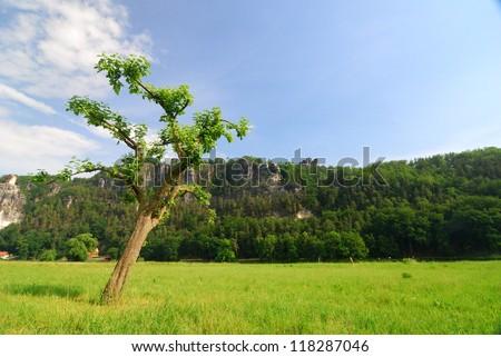 A tree  under blue sky - stock photo