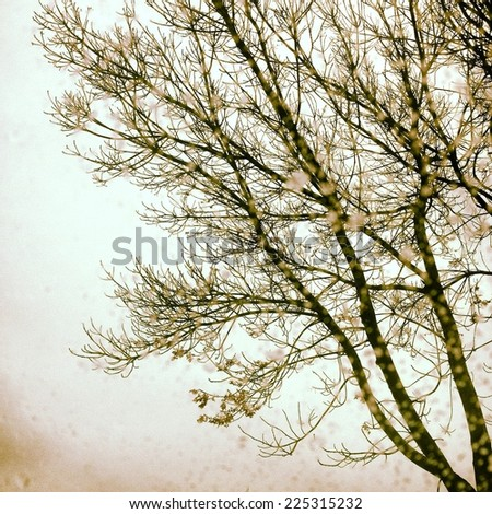 A tree with buds and flowers against a very pale sky. - stock photo