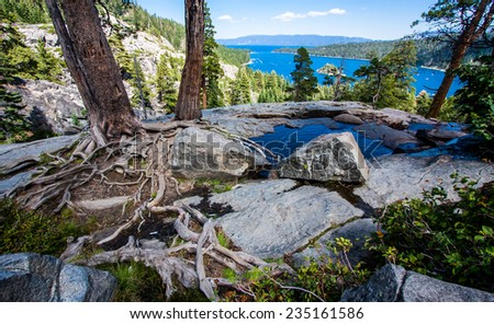 A tree with exposed roots in Emerald Bay during summer at Lake Tahoe, California / Nevada. - stock photo