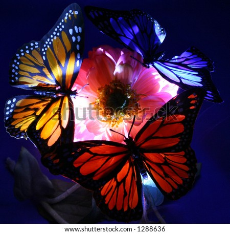 A trio of butterflies at night. Illuminated by light - stock photo