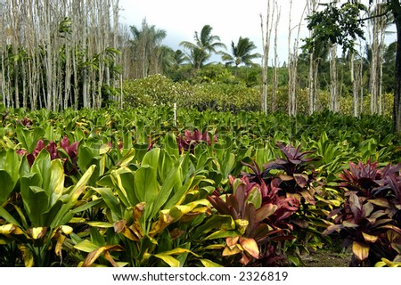 A Troipical flower plantation on a bright sunny afternoon - stock photo