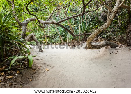 a tropical and lush jungle on an exotic island called Phi Phi leh, Thailand - stock photo