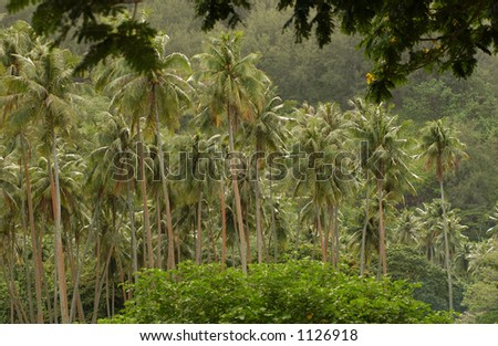 A tropical forest, Moorea, Tahiti, French Polynesia, South Pacific