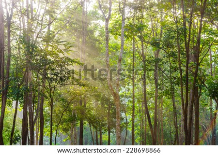 A tropical forest with sunshine in Northern Thailand - stock photo