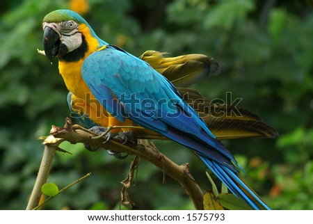 A tropical parrot from the Amazon