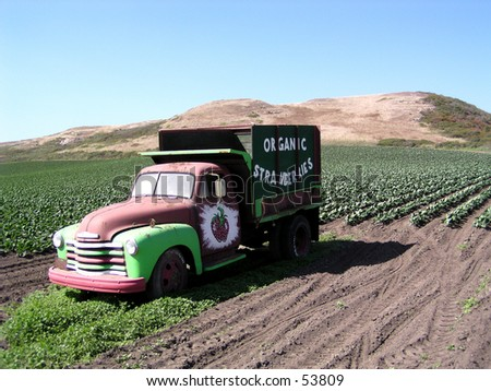 a truck on the hills in a strawberry field