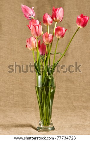 a tulips in a vase - stock photo