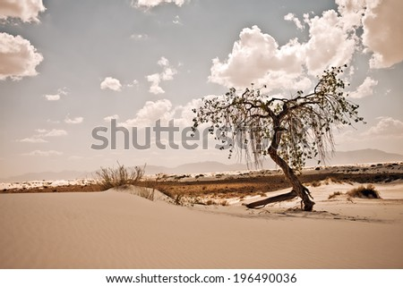 A twisted tree stands alone in a desert dune on a bright and cloudy day.