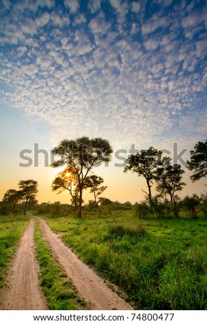 A two track road running through stunning african bush at sunset