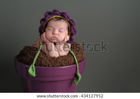 A two week old newborn baby girl sleeping in a purple flower pot. She is wearing a crocheted flower bonnet. Shot in the studio on a gray background. - stock photo
