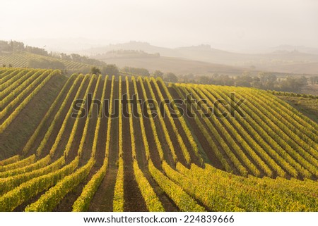 A typical autumnal landscape in Chianti (Tuscany) - stock photo