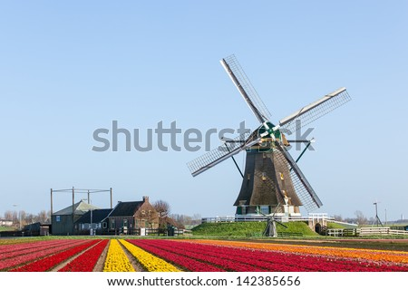 A typical Dutch landscape  of a windmill at the right with red and yellow flowering Tulip fields in the foreground against a clear blue sky - stock photo