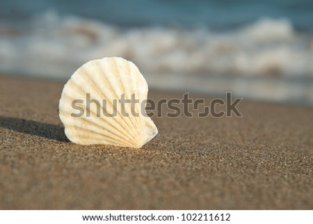 A typical seashell lies on the edge of the wet sand, followed by a wave.