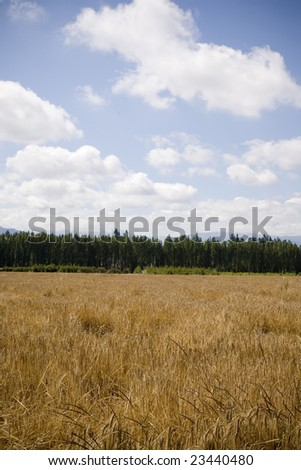 A U Pick berry farm in the Pacific Northwest. - stock photo