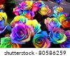 A unique and very special rainbow roses - stock photo
