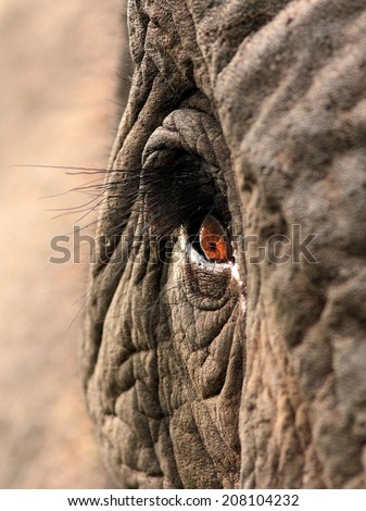 A unique look into the eye of one of the worlds most loved animals,the African elephant. Taken in South Africa. - stock photo