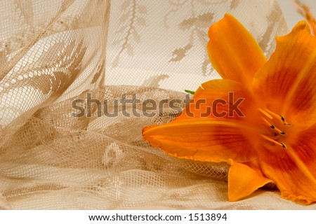 A varied orange color lily and lacy curtain provide the backdrop for a wedding invitation, feminine type announcement, or bereavement card.