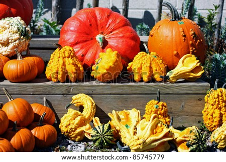 a variety of autumn gourds - stock photo
