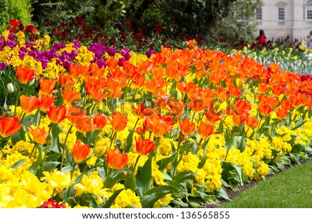 Variety bright spring flowers bloom english stock photo safe to use a variety of bright spring flowers bloom in an english country garden mightylinksfo
