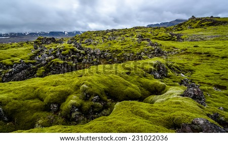 A vast lava field with green moss in Iceland - stock photo