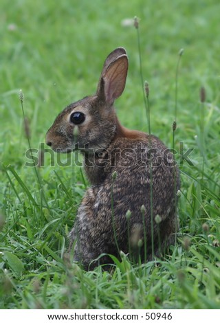 A very curious rabbit. - stock photo