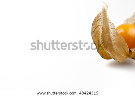 A very delicate physalis. - stock photo