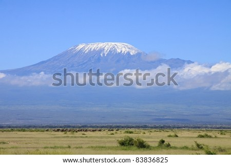 A very large herd of elephants move into Amboseli National Park, Kenya to feed, with mount Kilimanjaro rising above the savanna in the background - stock photo