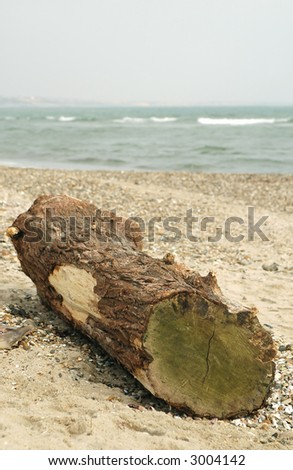 a very large piece of driftwood - stock photo
