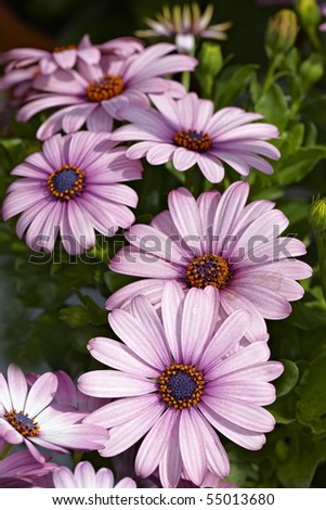 A very sharp and detailed photo of Natural purple flowers closeup - stock photo