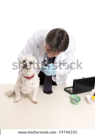 A veterinarian begins a checkup on a dog - stock photo