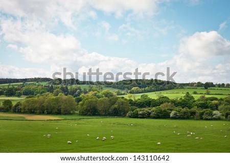 A vibrant Northumberland summer landscape near Hexham - stock photo