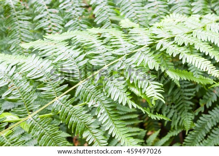 A view of a group fern leaves