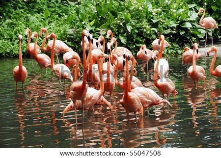 A view of a group of flamingo feeding on small fishes by the lake