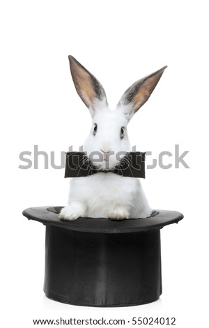 A view of a rabbit with bow tie in a hat isolated on white background - stock photo