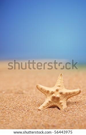 A view of a sea star on a sandy beach against blue sky - stock photo