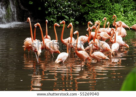 A view of beautiful and colorful  flamingos resting on a dry area of the lake