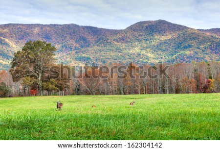 A view of Cades Cove in fall and the Smokey Mountains with deers in meadow. - stock photo