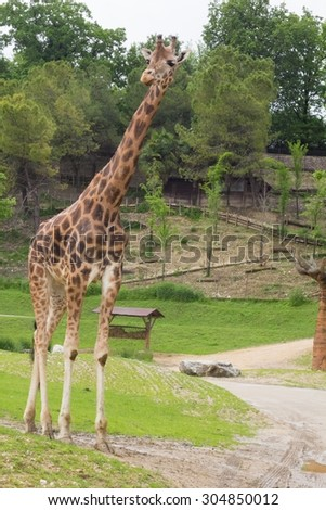 a view of colored giraffe - stock photo